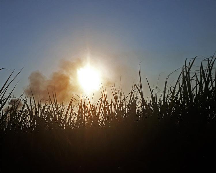 Comissão de Mudança Climática é aprovada  na Câmara de Piracicaba